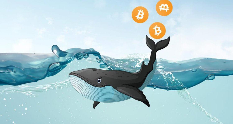 Bitcoin-kit